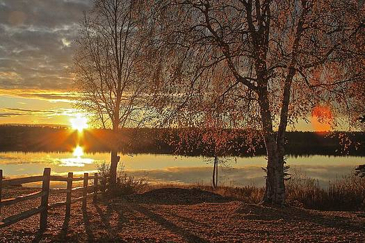 Willow Autumn by Donna Quante