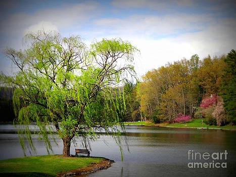 Willow Lake by Crystal Joy Photography