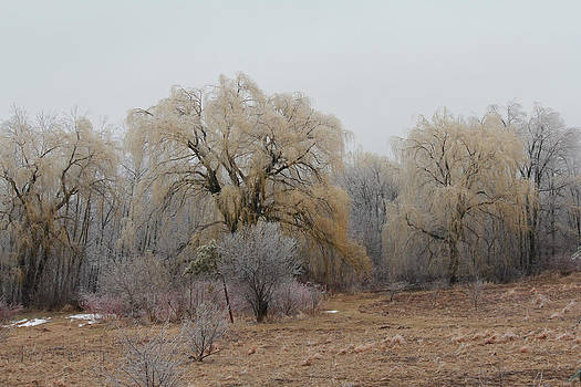Willow Trees Iced by Carrie  Godwin