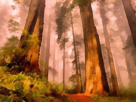 Wilted Woodlands  by Francisco Sanchez Salas