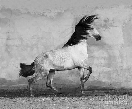 Wind Storm by Carol Walker