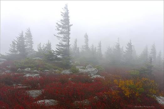 Wind Swept Pines Amongst the Foggy Mist by Daniel Behm