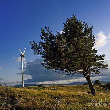BERNARD JAUBERT - Wind turbine and tree on the plateau of  cezallier. Auvergne. France.