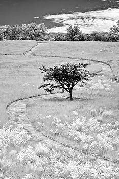 Dan Carmichael - Winding Trails in the Blue Ridge