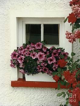 Joe Cashin - Window