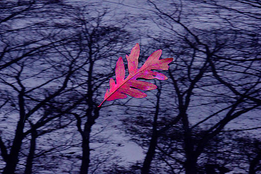 Window leaf 001 by Andy Lawless