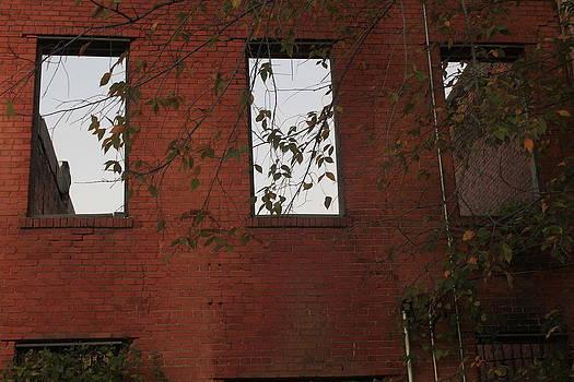 Window Of Park by Jill Runkel