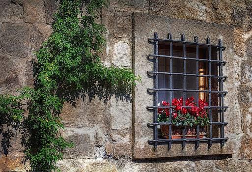 Window With Cyclamen by Leonardo Marangi