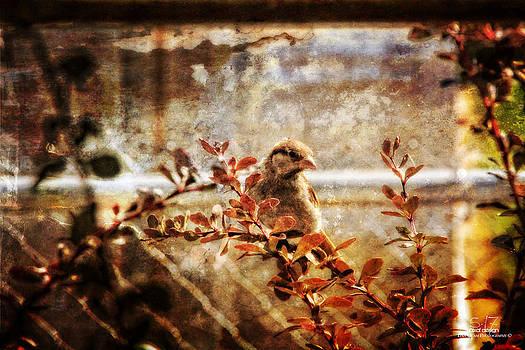 Window Wren by Dan Quam