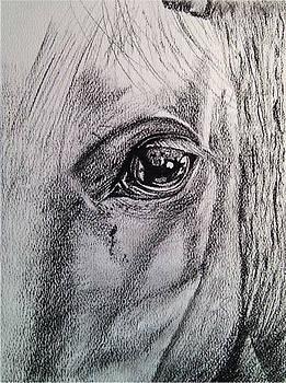 Windows I Horse. by Paula Steffensen