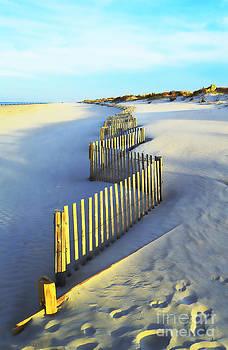 Windswept at Sunset - Jersey Shore by Joseph J Stevens