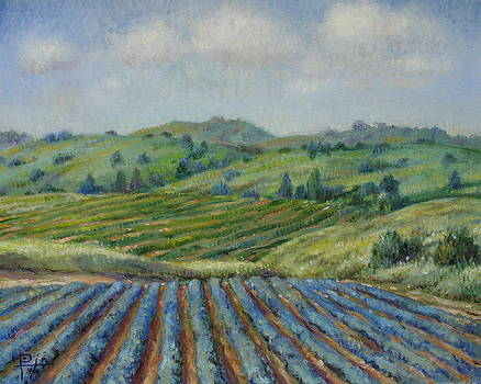 Wine Country by Henry David Potwin