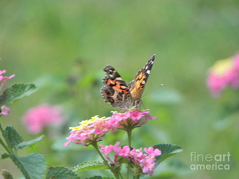 Winged Visitor by Cindy Hudson