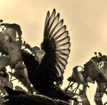 Judy Via-Wolff - Wings