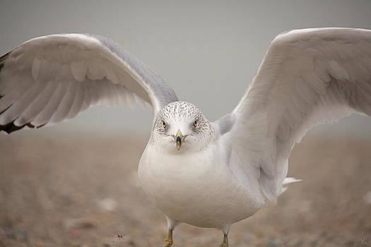 Karol  Livote - Wings