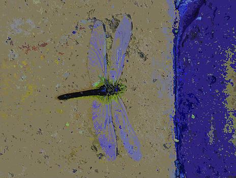Wings by Leon Hollins III