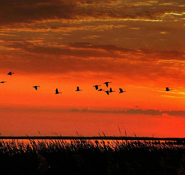 Wings on High by Larry Trupp