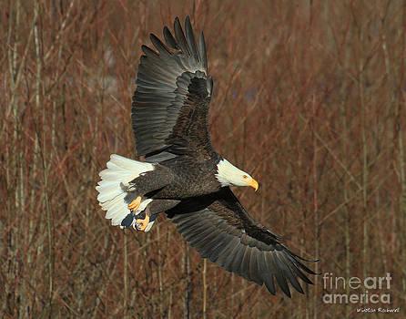 Wings by Winston Rockwell