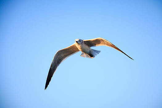 Wingspan by Brent Roberts