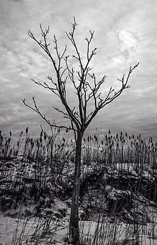 Frank Winters - Winter 2015 Barnstable Harbor