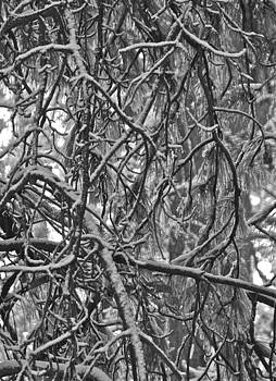 Winter Abstract by Michele Myers
