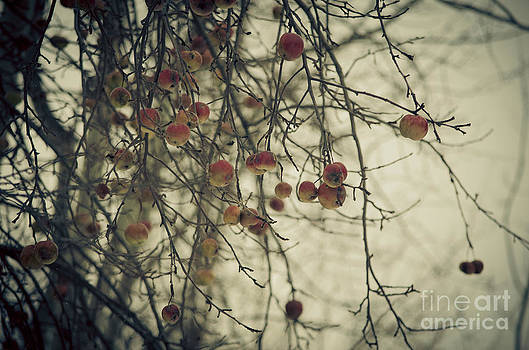 Winter Apples by Tiffany Rantanen