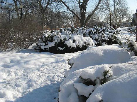 Alfred Ng - winter at the gardens