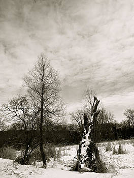 Winter by Azthet Photography