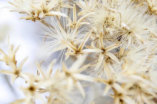 Winter Blooms by Rhonda DePalma