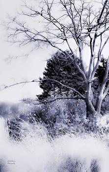 Julie Palencia - Winter Blue