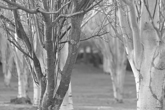 Winter Branches by Pico Soriano