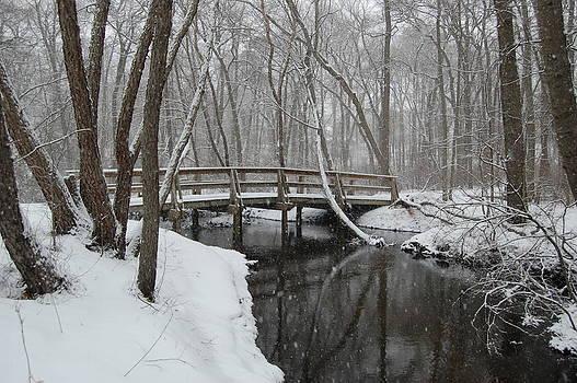 Winter Calm by Joe Varneke