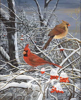 Winter Cardinals by Marshall Bannister