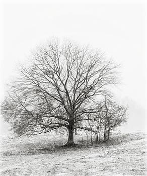 Cris Hayes - Winter Chrome