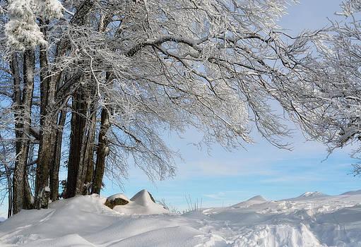 Winter by Claudia Moeckel