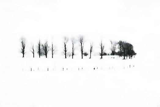 Andrea Kollo - Winter Contrast