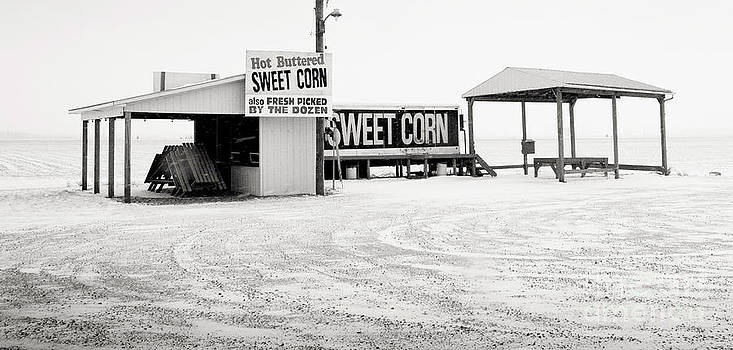 Winter Corn by Mark Clifford