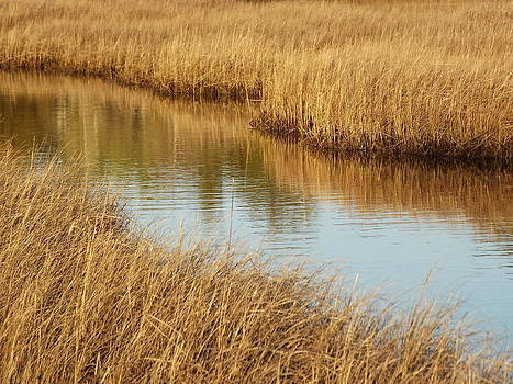 Winter Creek by Matthew Kay