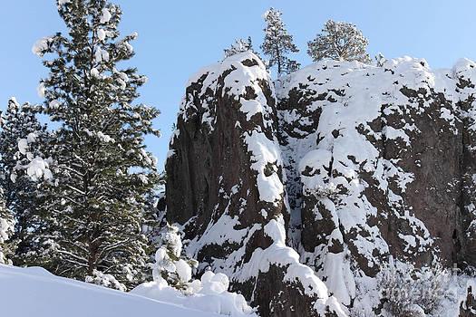 Birches Photography - Winter Days