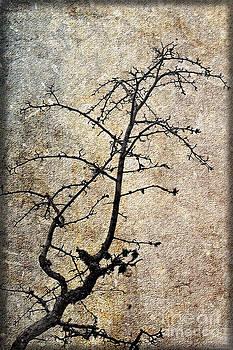 Liz  Alderdice - Winter Detail