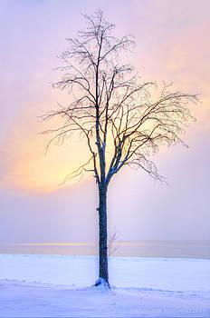 Marianne Kuzimski - Winter Dreamscape