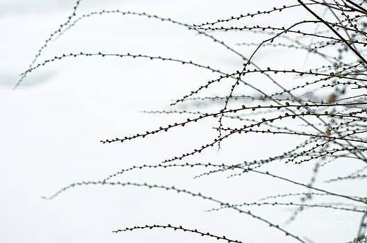 Gwyn Newcombe - Winter Essence