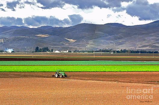 Susan Wiedmann - Winter Farm in California