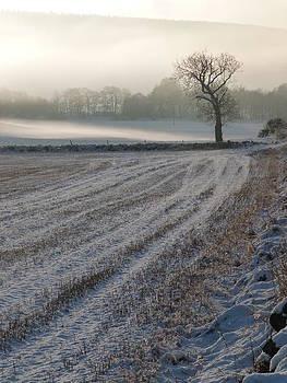 Winter Field by Jennifer Watson