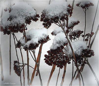 Winter Flowers by Mikki Cucuzzo