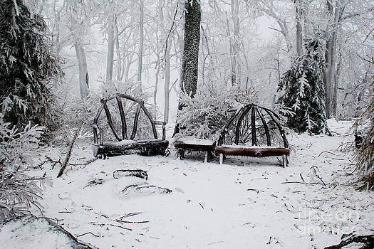 Winter Forest Seating by Tom Carriker