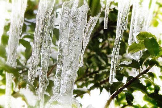 Scott Hovind - Winter Glass