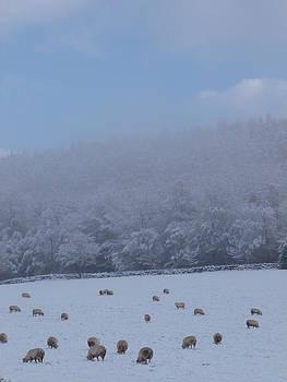Winter Grazing 1 by Jennifer Watson