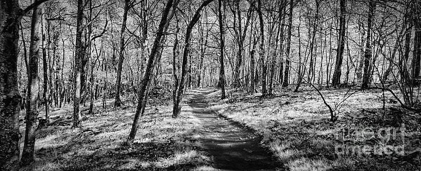 Dan Carmichael - Winter Hike