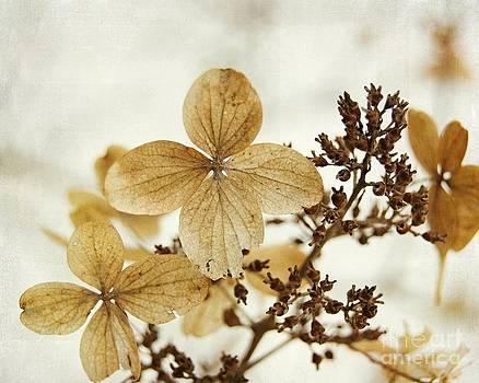 Winter Impressions IV by Katerina Vodrazkova
